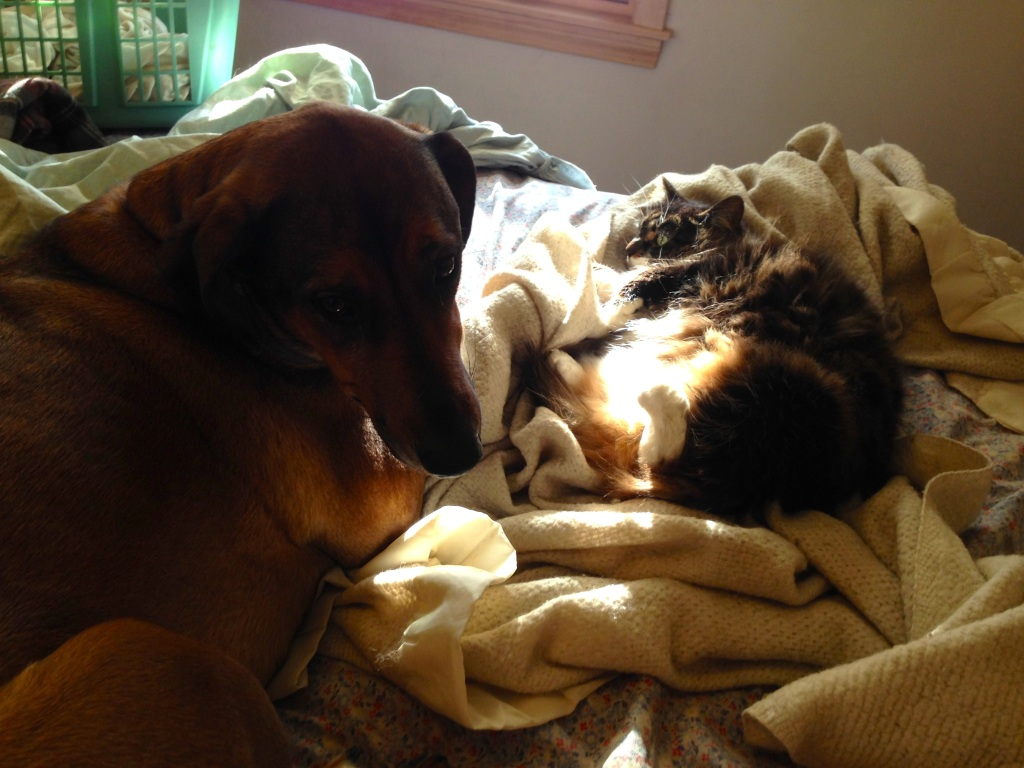 Sharing a Sunbeam with Your Best Bud