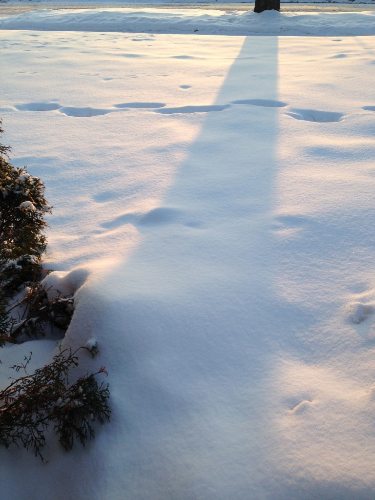 Long shadow of a tree on the snow.