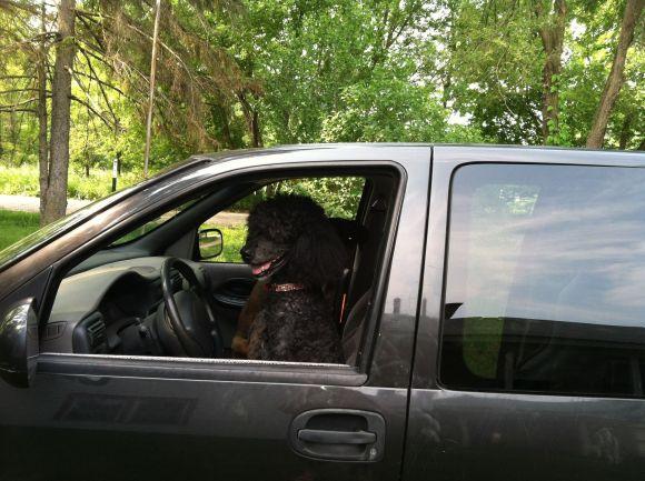 Merlin sitting in the Van