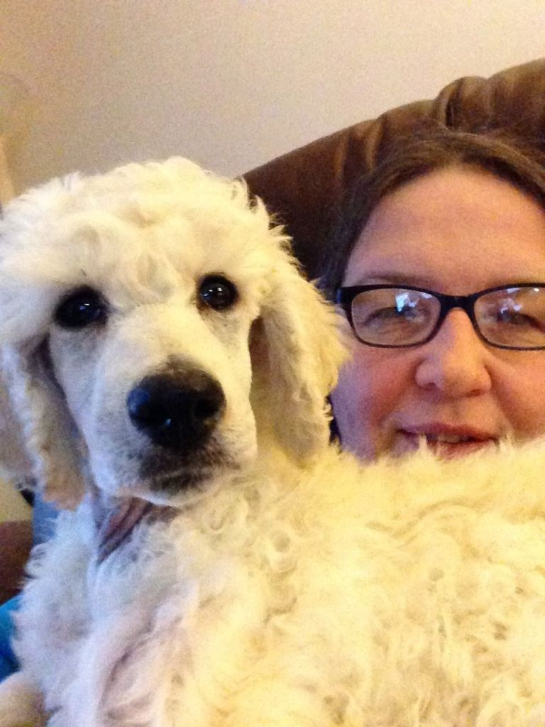 White standard poodle puppy.